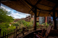 Wildlife Viewing Area at Disney's Animal Kingdom Lodge