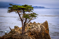 The Lone Cypress, Pebble Beach, CA