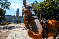 Horse in Front of Parliament, Québec City