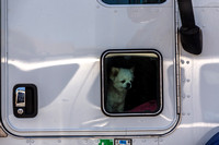 A Dog Peeking Out a Truck Window, Napa Valley, CA