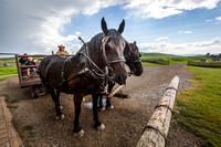 Horse and Cart Ride at Bar U Ranch National Historic Site, Alberta