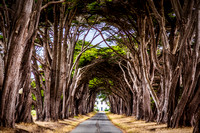 Cypress Grove, Point Reyes, CA