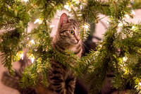 Franny in the Christmas Tree