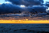 Birds Fly Over Cape Cod Bay, First Encounter Beach, Eastham, Cape Cod